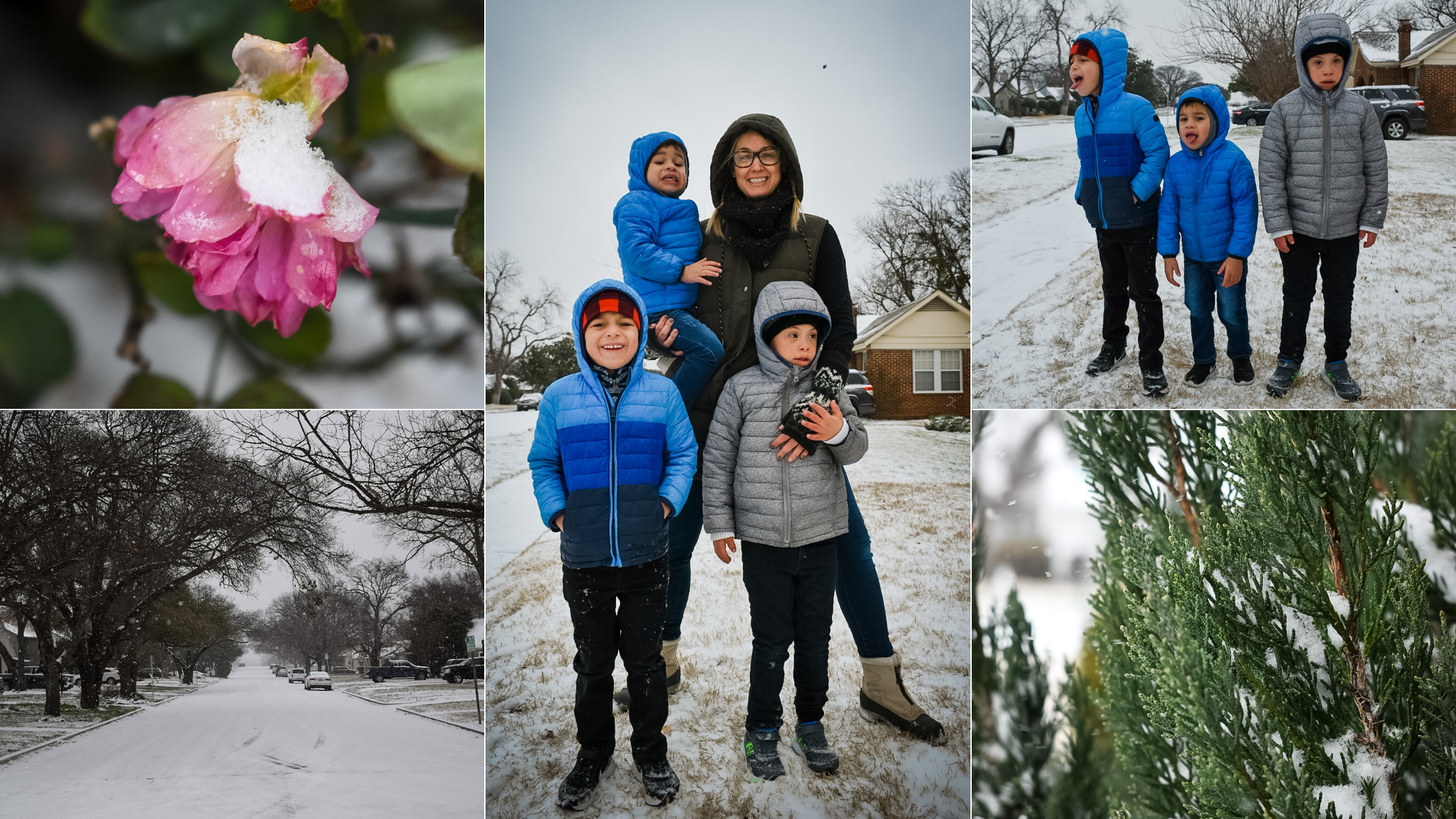 Photos of the Texas ice storm in 2021 including a frozen rose, frozen juniper shrub, a street covered in snow, and a mom and three boys in the snow